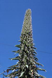 0034-TropischePflanze