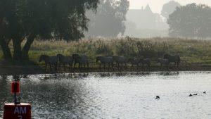 Herde Wildpferde